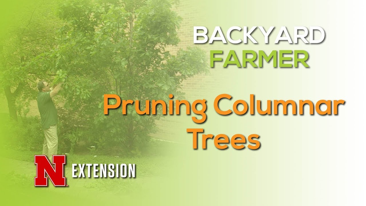 Pruning Columnar Trees Youtube