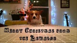 A Christmas Corgi