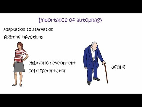 Autophagy - the 2016 Nobel Prize in Physiology or Medicine ...