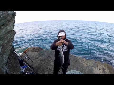 Shore Jigging - Atlantic Bonito(Live strike and fight) 2kgr- ΠΑΛΑΜΙΔΑ