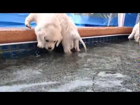 video lucu 2016.. anjing berenang