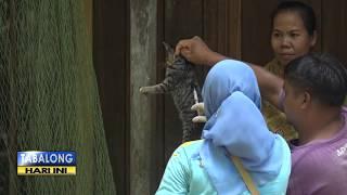 Diary Kucing - Bahaya Kucing Terkena Heat Stroke, Ini Tanda dan Cara Mengatasinya - Eps 89 Memasuki .