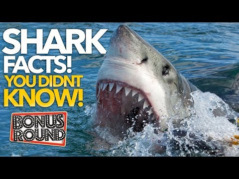 SHARK FACTS YOU