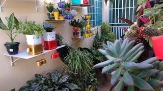 Cultivar Plantas Ajuda A Viver Melhor