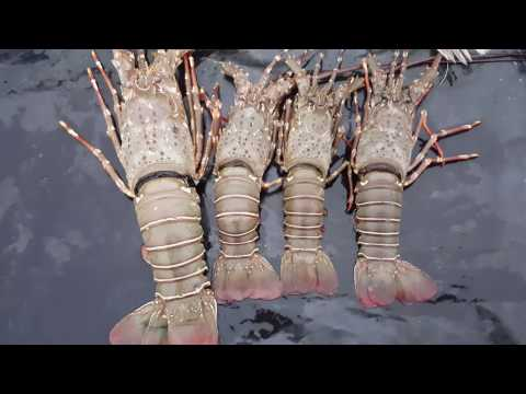 Lobster and other sea foods in the beach | Live kitchen | SaintMartin | Bangladesh
