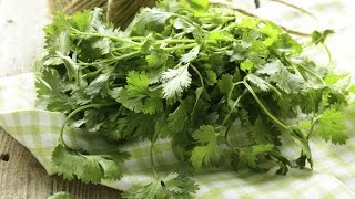 The Basics: How to Use and Store Cilantro
