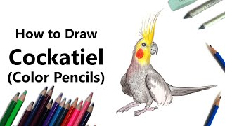 How to Draw a Cockatiel with Color Pencils [Time Lapse]