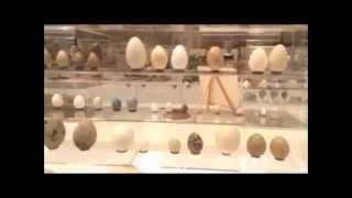 WFVZ Bird/egg Museum/Museo de aves/huevos WFVZ