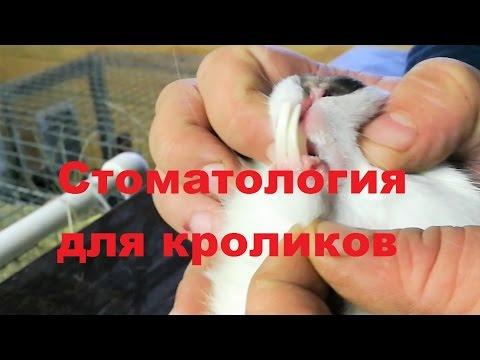Стоматология для кроликов