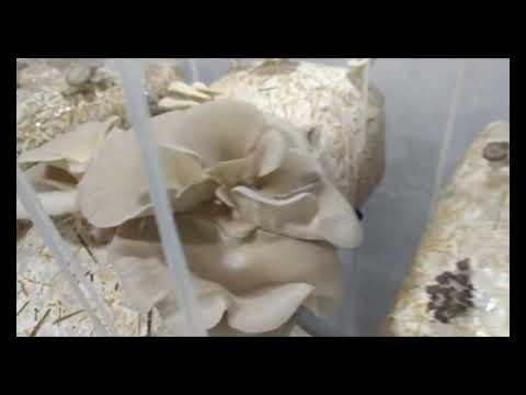 Бизнес план по выращиванию грибов, скачать примеры