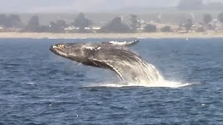 9.7.15 Afternoon WHale Watching cruise #Monterey #BigBlueLive #Adventure
