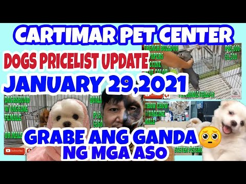 CARTIMAR PETSHOP MANILA, PHILIPPINES DOGS PRICELIST UPDATE 01-29-21 PUREBREED DOGS FOR SALE.vlog#136