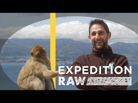 Can Wild Monkeys Hang With Humans? | Expedition Raw