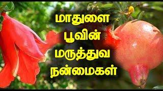 மாதுளை பூவின் மருத்துவ நன்மைகள் | Medicinal Benefits of Pomegranate Flower