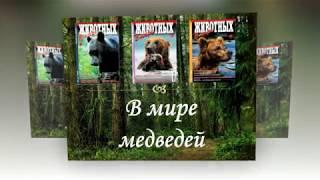 Виртуальная выставка ''В мире медведей''