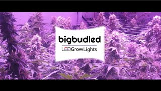 world s first real 1000 watt led grow light for cannabis bbl1000 review