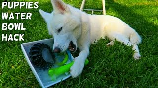 Frozen Toys Hack for Your Dog