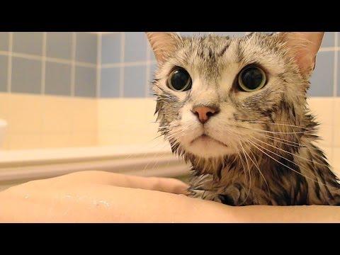 湯船に浸かる猫 哀切な声で鳴く
