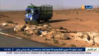 الحماية المدنية : وفاة 16 شخصا و إصابة 25 آخرين في حوادث المرور