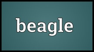 Beagle Meaning