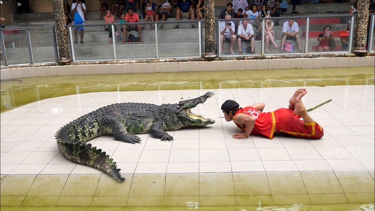 Thought You Have Seen It All! Know About The Largest Crocodile Farms In Thailand That Will Surely Amaze You 8