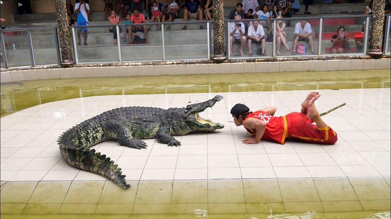 Thailand Crocodile Farm - The most DANGEROUS job in the world ...