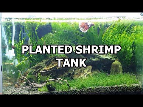 Planted Shrimp Tank and DIY CO2 SETUP - Philippines 4k 60fps