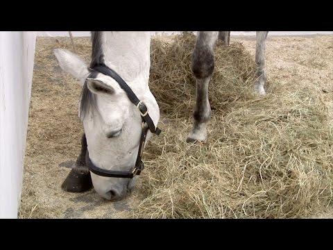 VTV Classics (r3): Jannis Kounellis: Untitled (12 Horses) (2006)