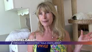 Yvelines | Le refuge de Nala confronté à la hausse des abandons de chats