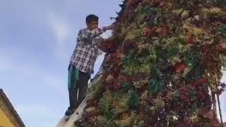 Baixar El árbol de Navidad de San Miguel de Allende