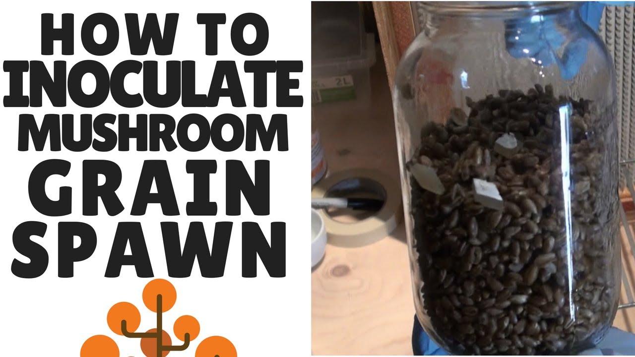 How to Make Mushroom Grain Spawn: Inoculating Sterilized Grain