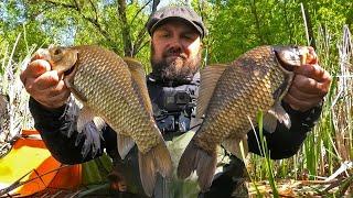 Килограммовые КАРАСИ Рыбалка в Лесном Озере на Секретную добавку в Прикорм Поклёвки крупным планом