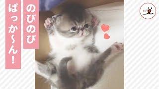 手足を伸ばして…ぱっか〜ん! あどけない仕草に思わずキュンとしちゃう❤️【PECO TV】 thumbnail