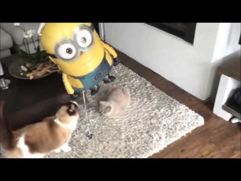 Funny cats | Cute cat | Funny Animals | Funny Animal Videos | Funny Animals Compilation