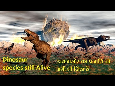 Dinosaur species still Alive In Today डायनासोर का प्रजाति जो अभी भी जिंदा है