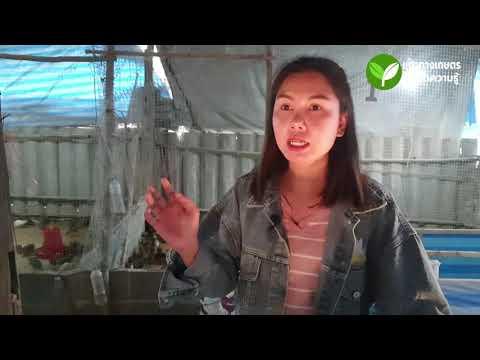 เกร็ดความรู้จากฟาร์ม : เรื่อง เทคนิคการให้อาหารนกกระทา