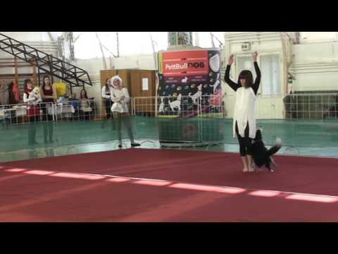 A BAJNOKOK: Kríz Orsolya - és Josephine, PettBull Dog Dancing Hungarian Open - 2016. Hatvan