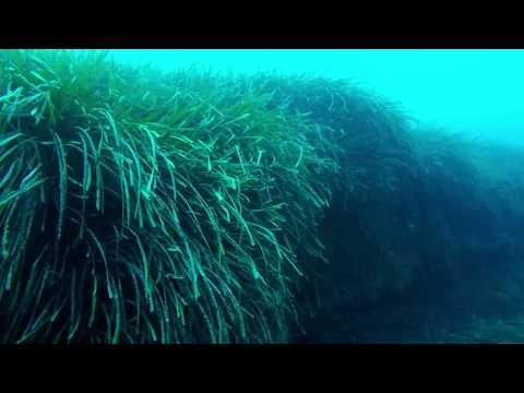 L'affascinante matte di Posidonia oceanica, una delle esclusive bellezze del Mare Nostrum