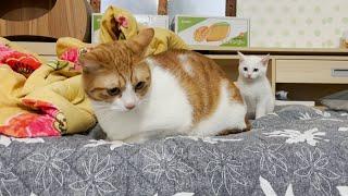 고양이 2마리와 청소기