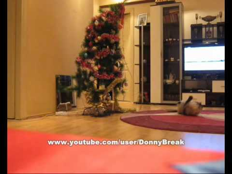 Funny Cat Knocks Down Christmas Tree Youtube