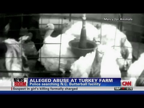 Cops look into abuse claim at turkey farm