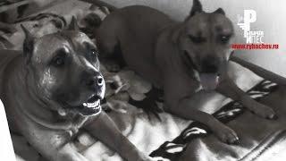 Собаки тоже умеют любить!)) [Рыбачёв и Пёс ЭПИЗОД 6]