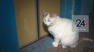 В Нижнекамске живет настолько ленивый кот, что добирается до квартиры только на лифте