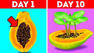 GROW YOUR SEEDS || Garden Hacks