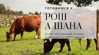 Готовимся к Рош а-Шана. Продолжение | Урок от директора портала VAIKRA р. Яакова Шатагина