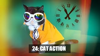 24: Cat Action |  with Sassy Lola The Cat