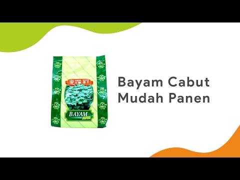 BAYAM CABUT, MUDAH PANEN | Benih Bayam Super Ta Fung | Toko Deeres