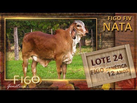 LOTE 24 - FIGO FIV NATA - HCFG 1504