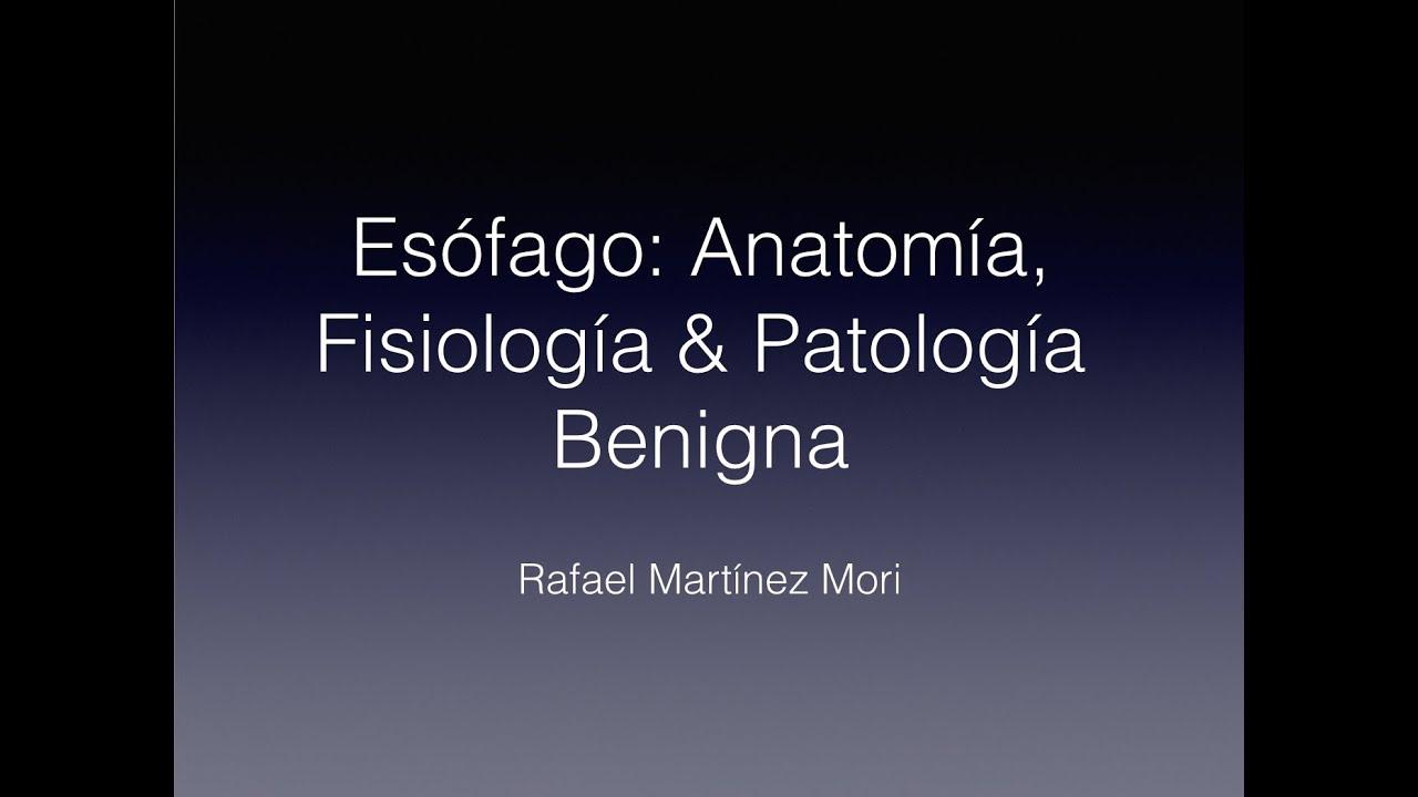 Esófago: Anatomía, Fisiología y Patología Benigna - YouTube