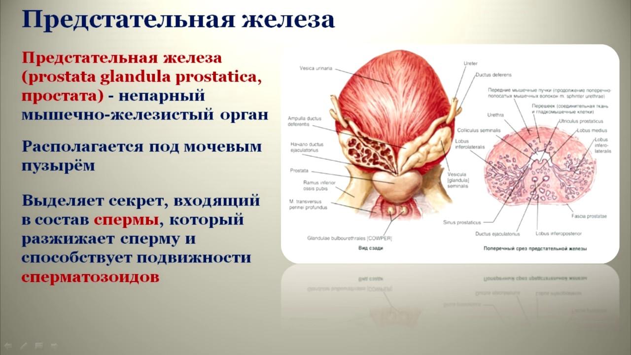 Как проверяют половые органы видео ксения